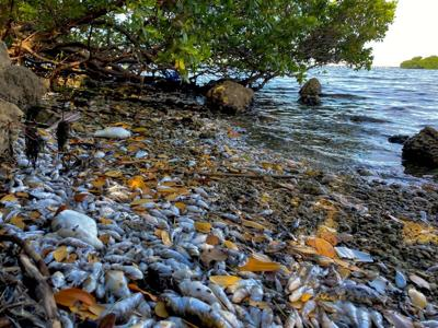 Biscayne Bay's natural flow likely to worsen without corrective measures