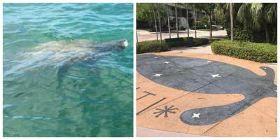 On Manatee Appreciation Day, ways to help the manatees