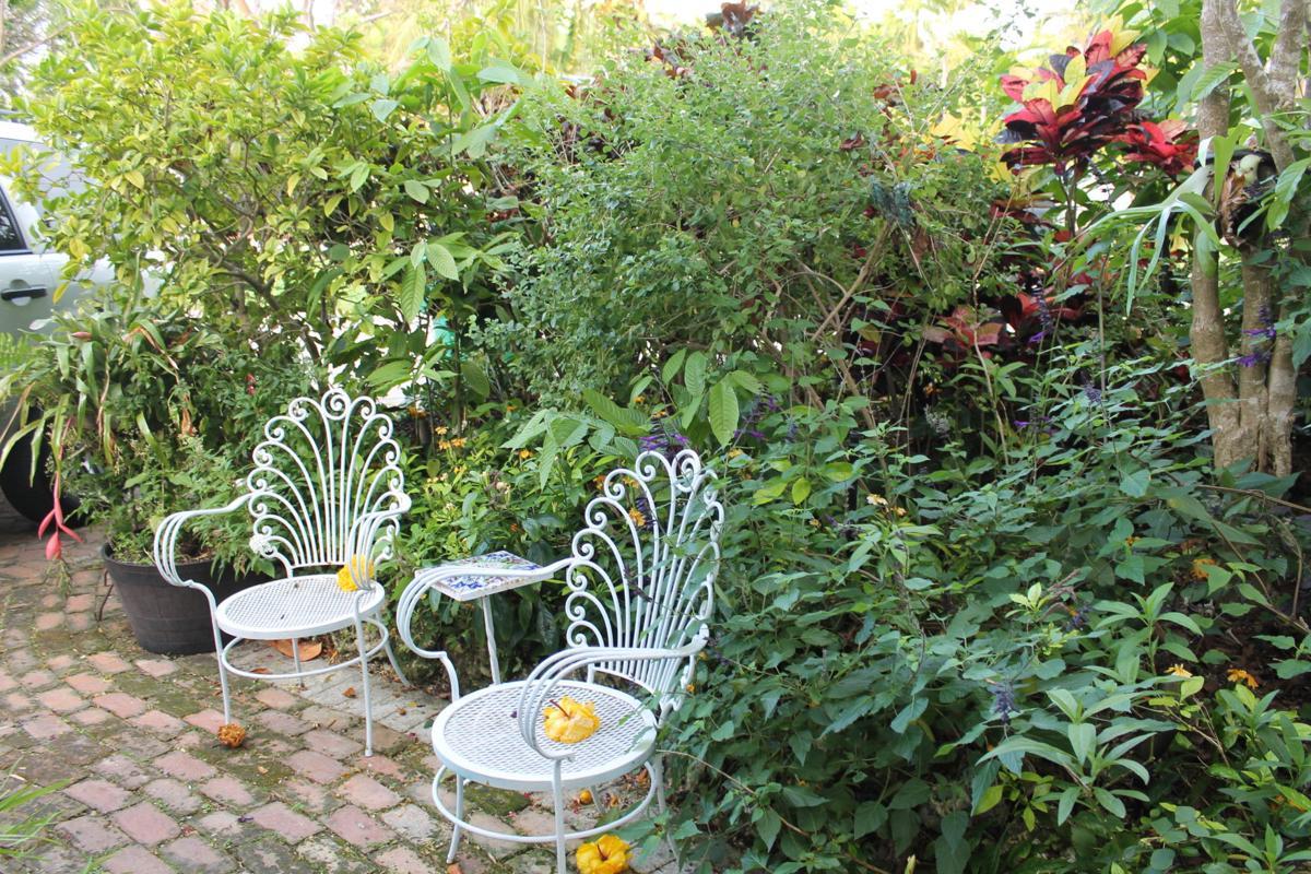 Master Gardener Ceci Sanchez;s home
