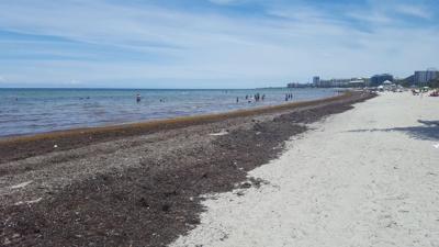 Village's plans on seaweed need rethinking