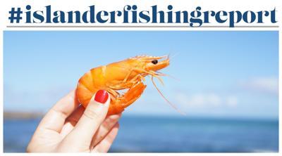 #fishingreport shrimp fishing