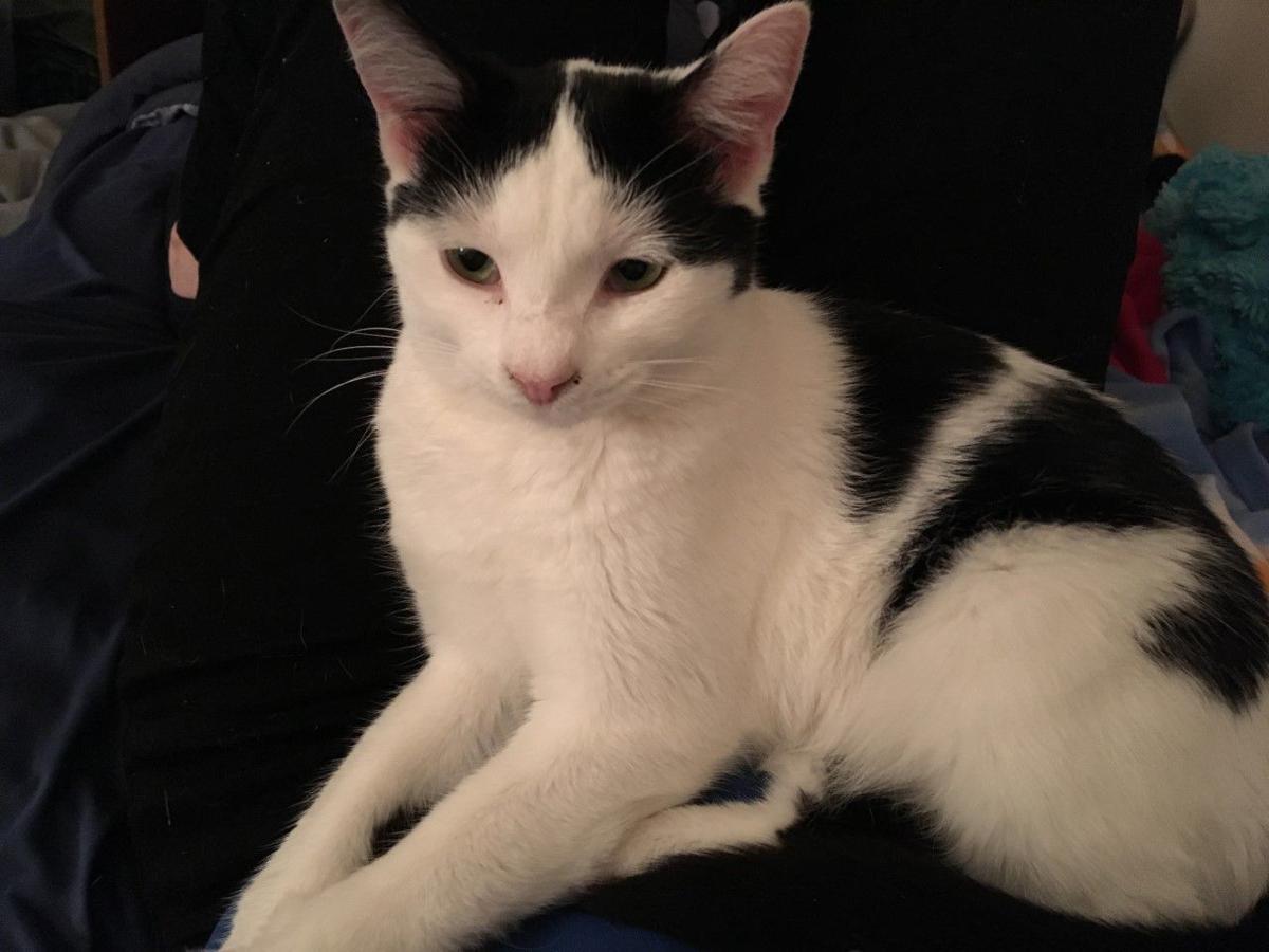 Kida_Leah Wright cat.jpg