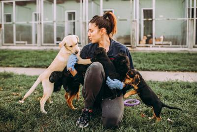 PAWS AND PAGES: National Adoption Weekend