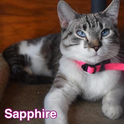 PET OF THE WEEK: Sapphire