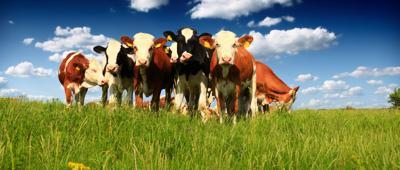 Rainfall, grass growth benefit cattle ranchers