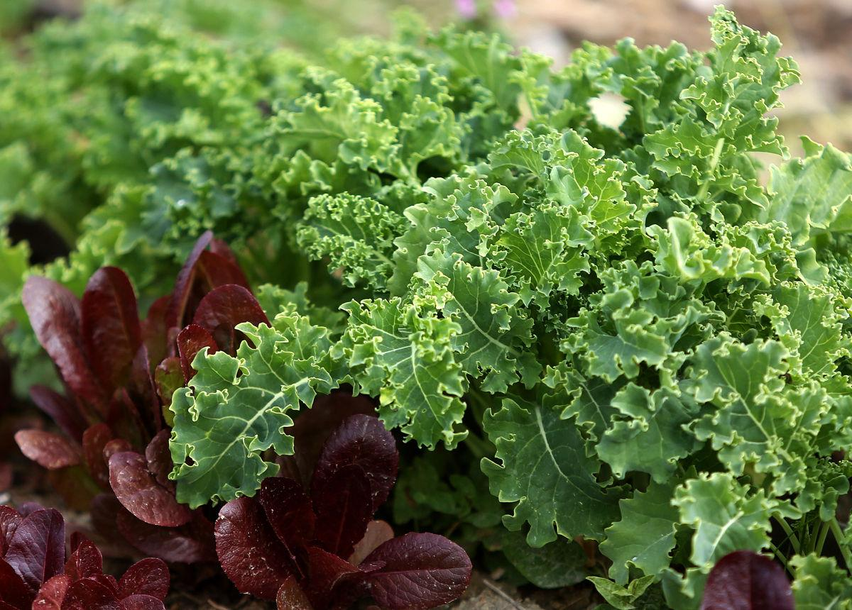 Tips for preparing the 'superfood' kale