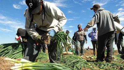 Farmworker overtime bill passes in the Assembly