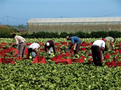 Lawmakers advocate for farm worker assistance