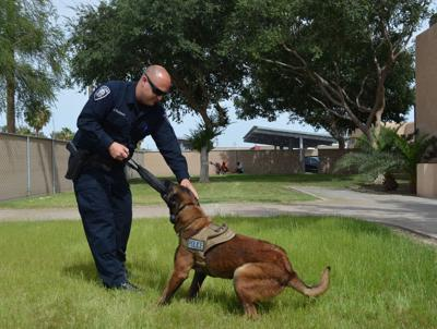 El Centro K-9s, officers shine at competition