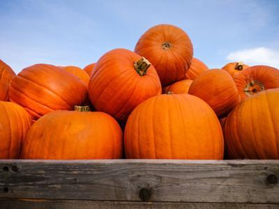 Pumpkin: So much more than a pie