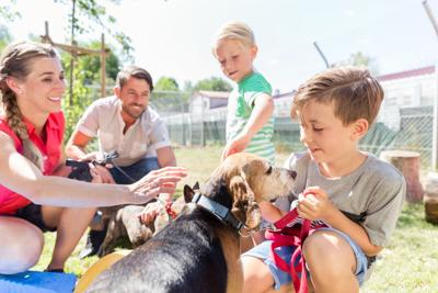 PAWS & PAGES: February 2020 National Adoption Weekend
