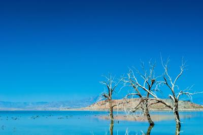 Tentative plan could be biggest step forward for the Salton Sea, officials say