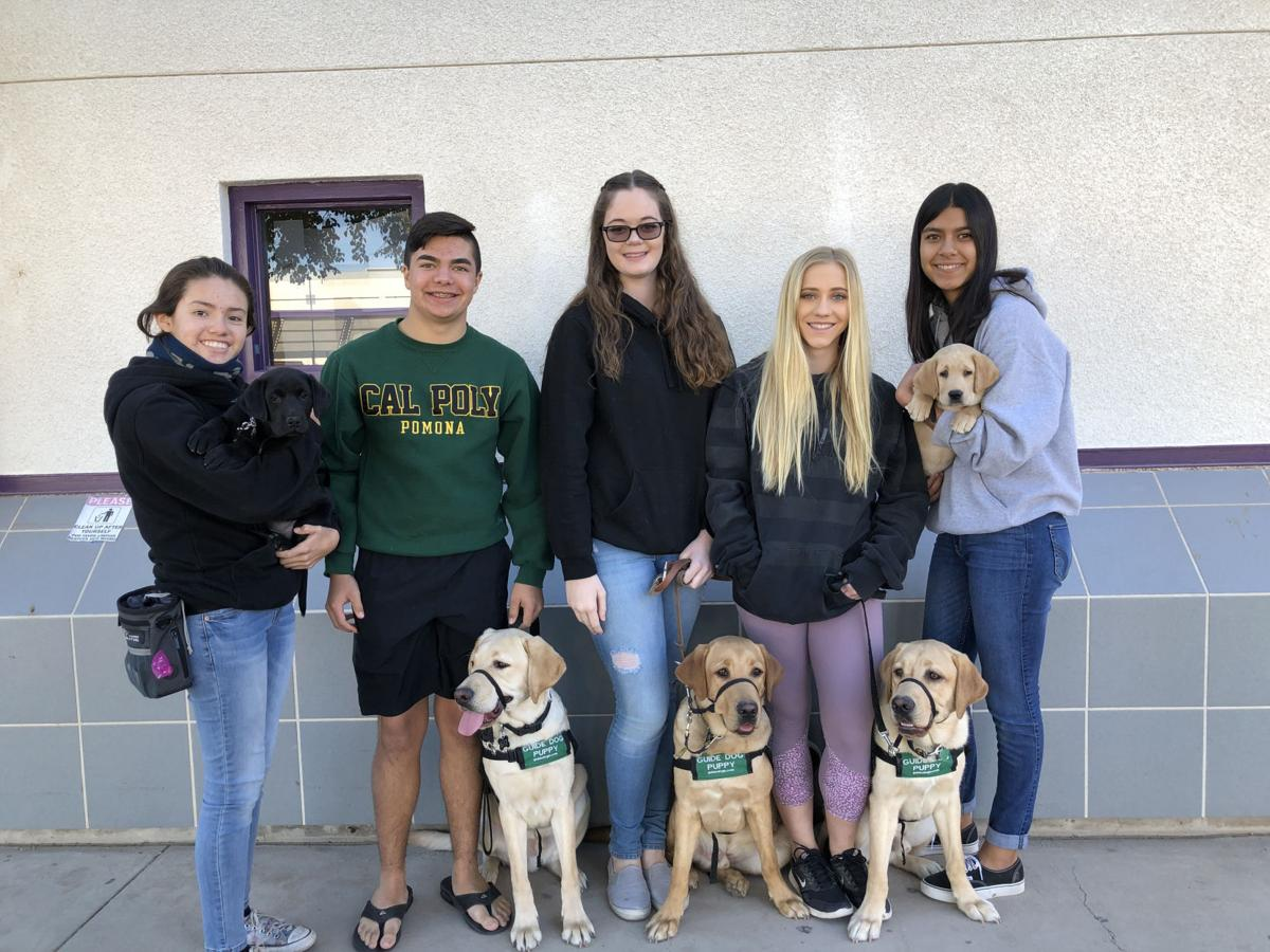 Southwest FFA students raise guide dogs