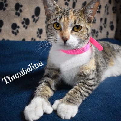 Pet of the Week: Thumbelina