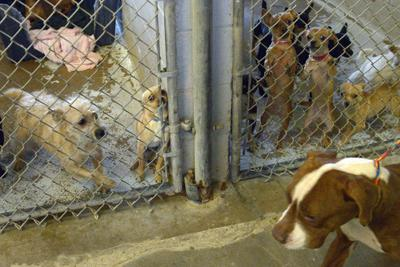 I.V. Humane Society overcrowded with animals, addressing the issue