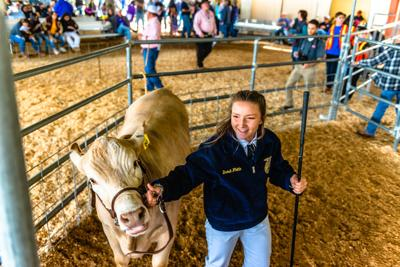 IV Expo announces changes for livestock area
