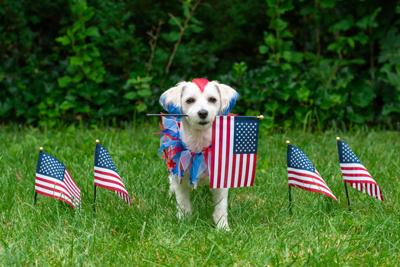 PAWS AND PAGES: Memorial Day and pets