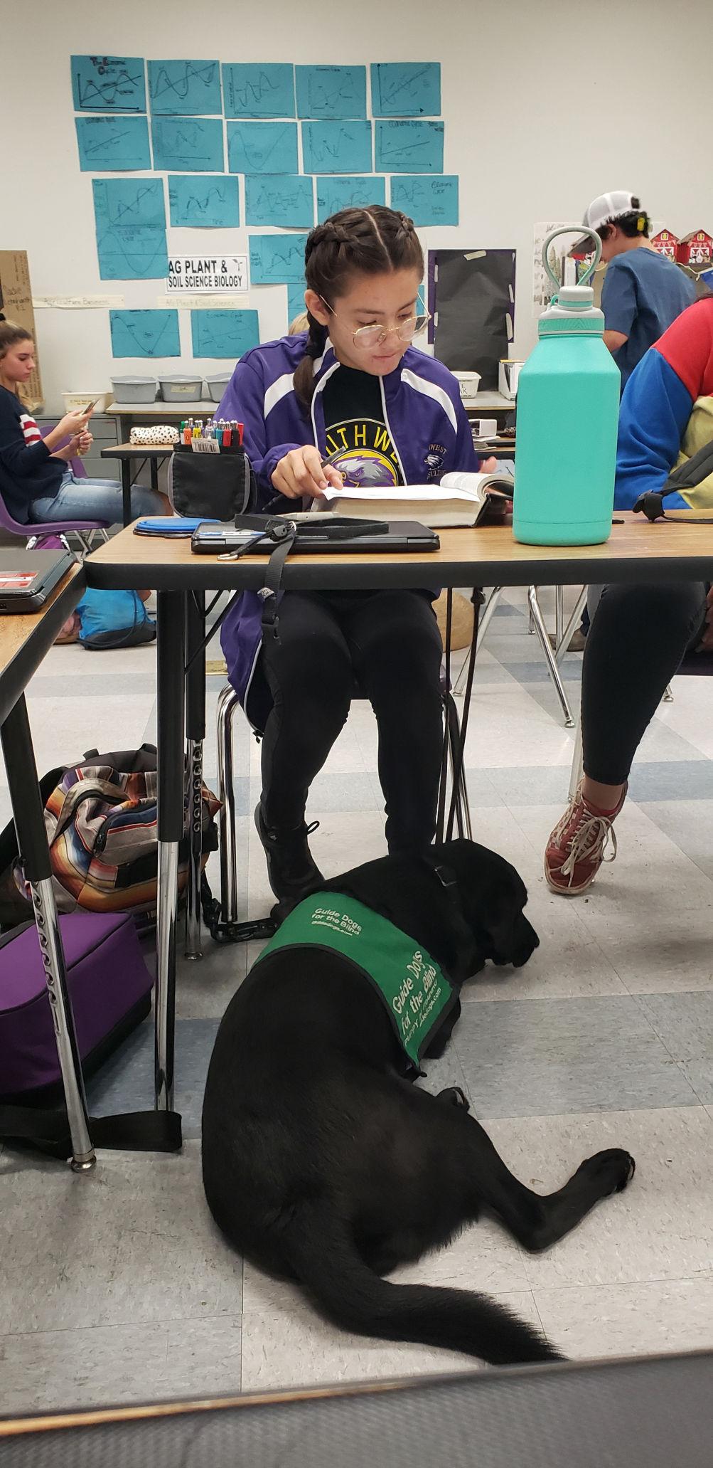 Puppy-raising program at SHS inspires handler and friends