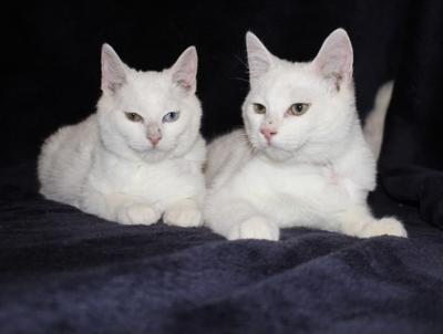 PETS OF THE WEEK: Spider Man (left) & Captain America (right)