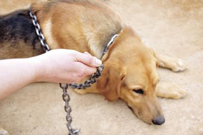 PAWS AND PAGES: Animal abuse prevention