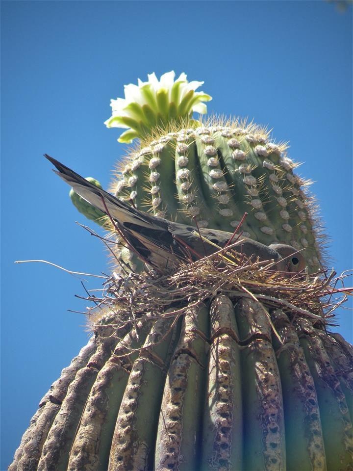 Bird songs: The desert offers a rich environment for bird watchers