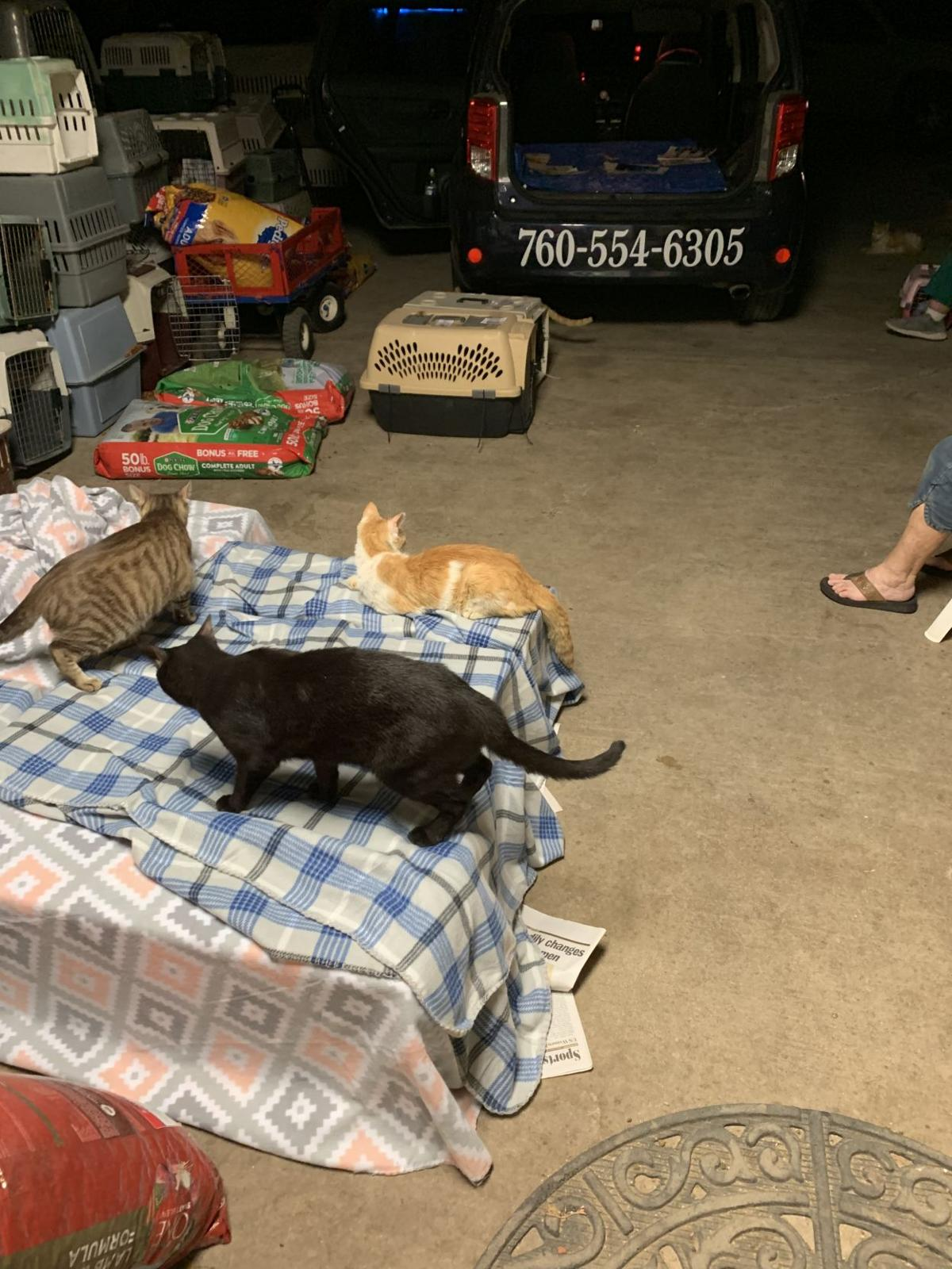Local cat rescues seek help in transporting cats to Mexicali