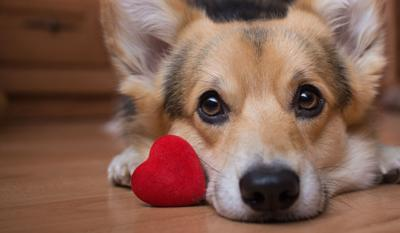 PAWS & PAGES: Congestive heart failure in dogs