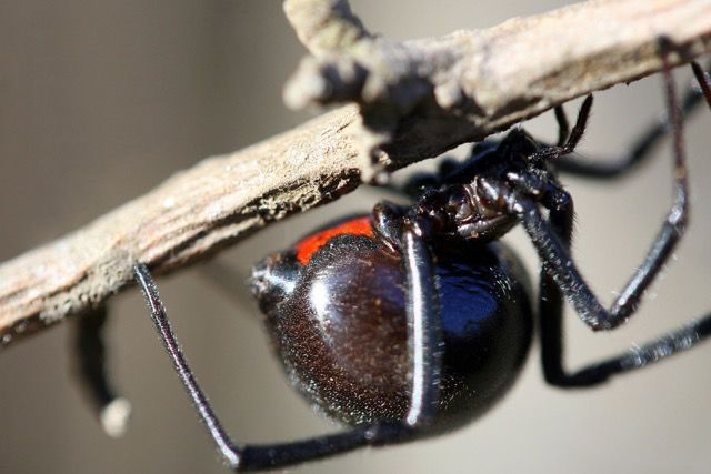 LAND OF EXTREMES: Facts and myths about spiders