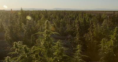 Proposed rule worries local hemp growers