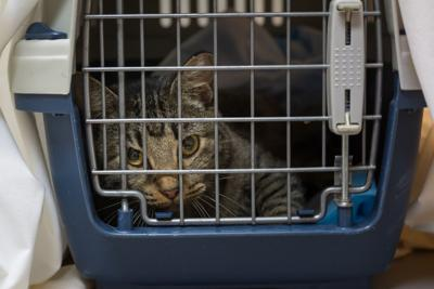 PAWS AND PAGES: Friendly feral deterrents