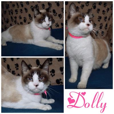 PET OF THE WEEK: Dolly