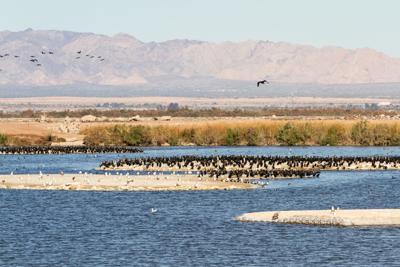 Salton Sea policy chief promises to overcome delays