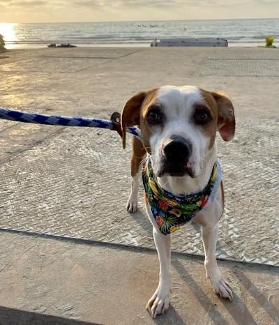 PET OF THE WEEK: Sparkle