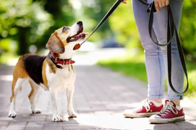PAWS AND PAGES: Walk for a dog