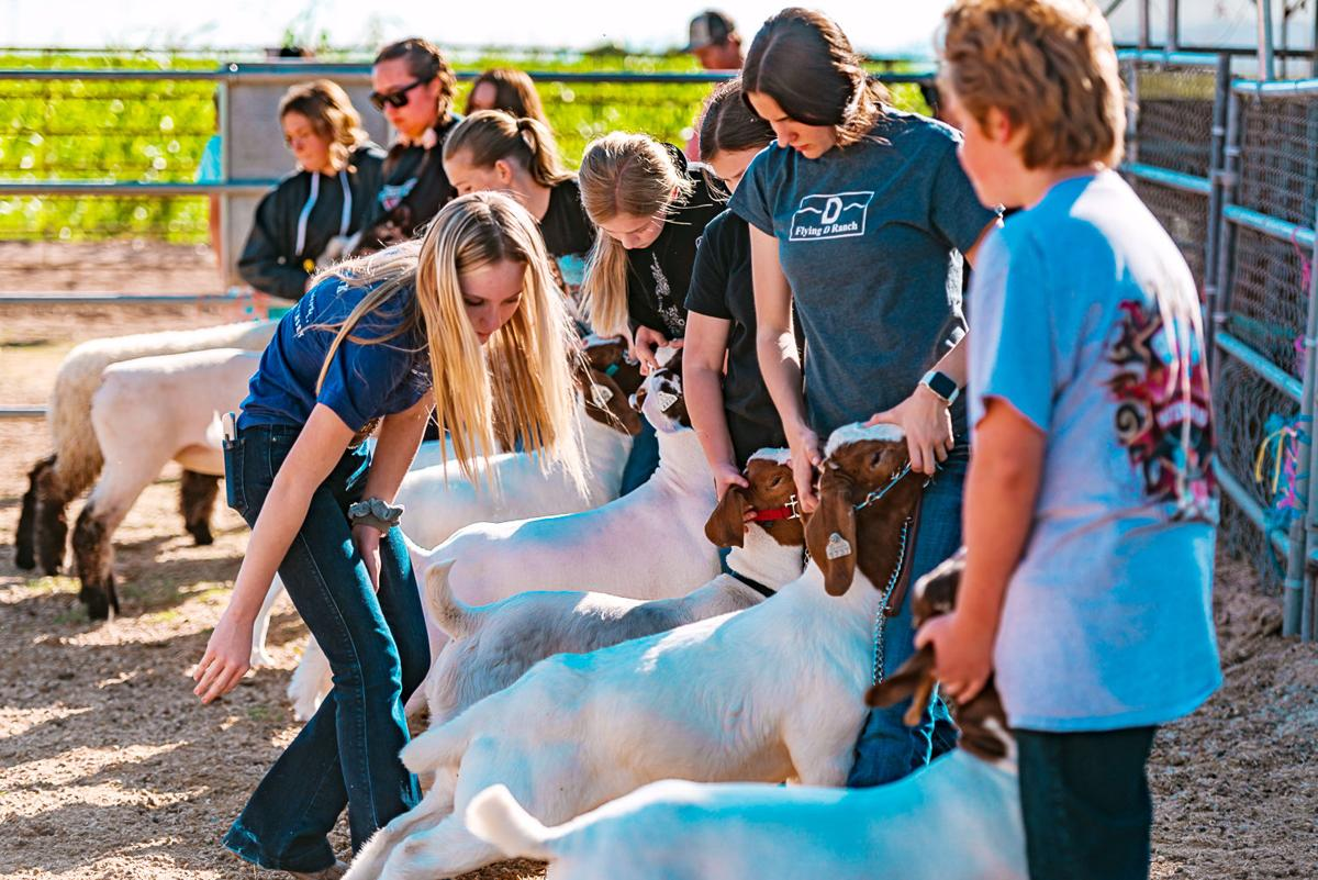 HHS grad uses college break to host lamb and goat clinic