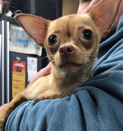 Pet of the Week: Winifred