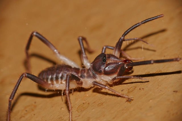 LAND OF EXTREMES: Creepy crawlers of the desert