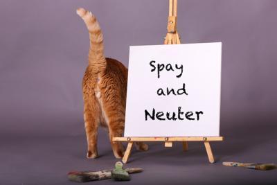 Spay and neuter myths