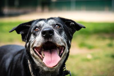 PAWS & PAGES: Adopt a Senior Pet Month