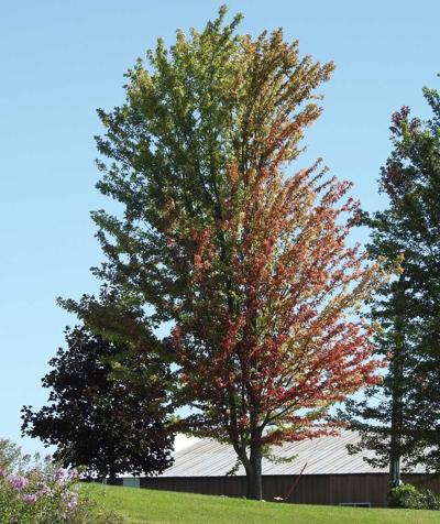 Sign of fall colors coming.