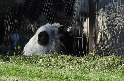 The old saying indicates that the grass is always greener on the other side of the fence