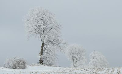 Hoarfrost has been common this winter in northeast Wisconsin