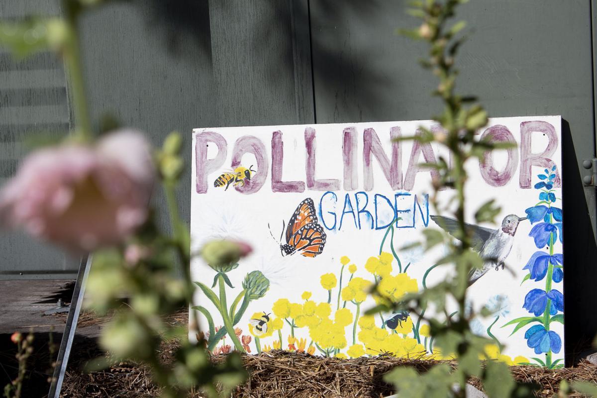 NAU community gardens look toward new projects