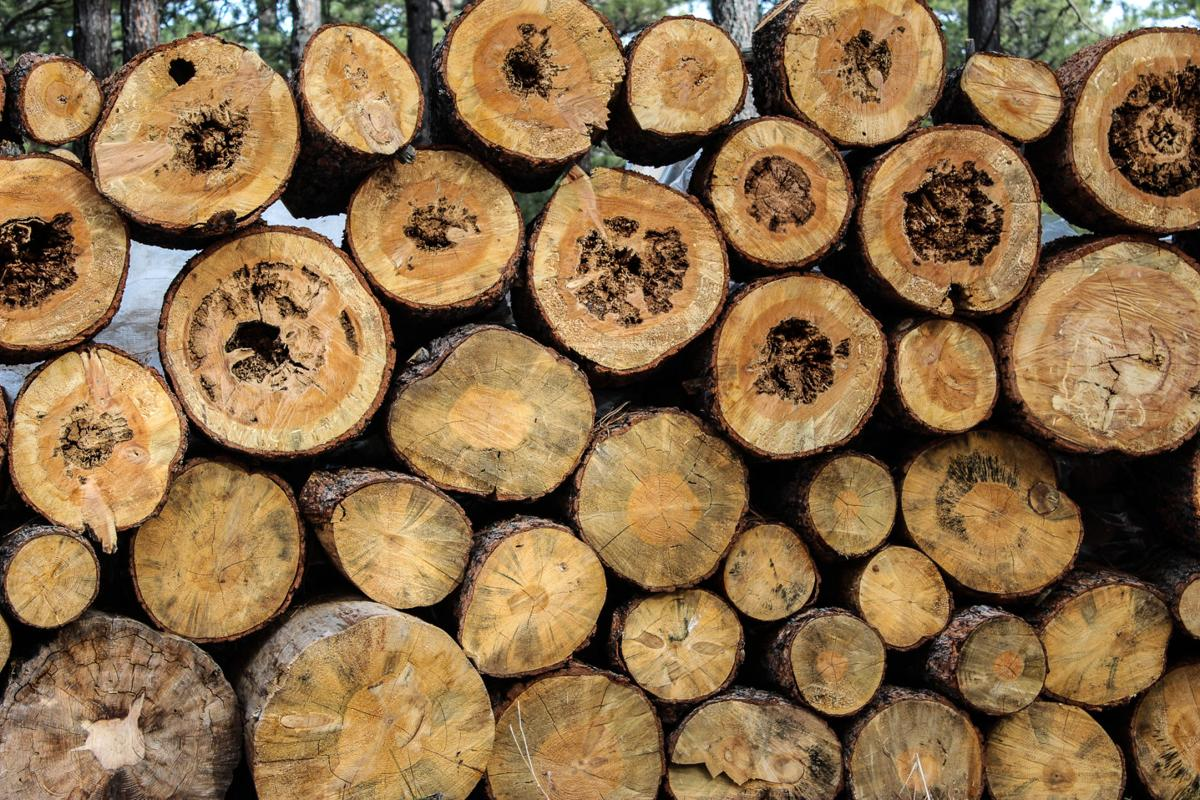 Logging slog: fire prevention process slows down