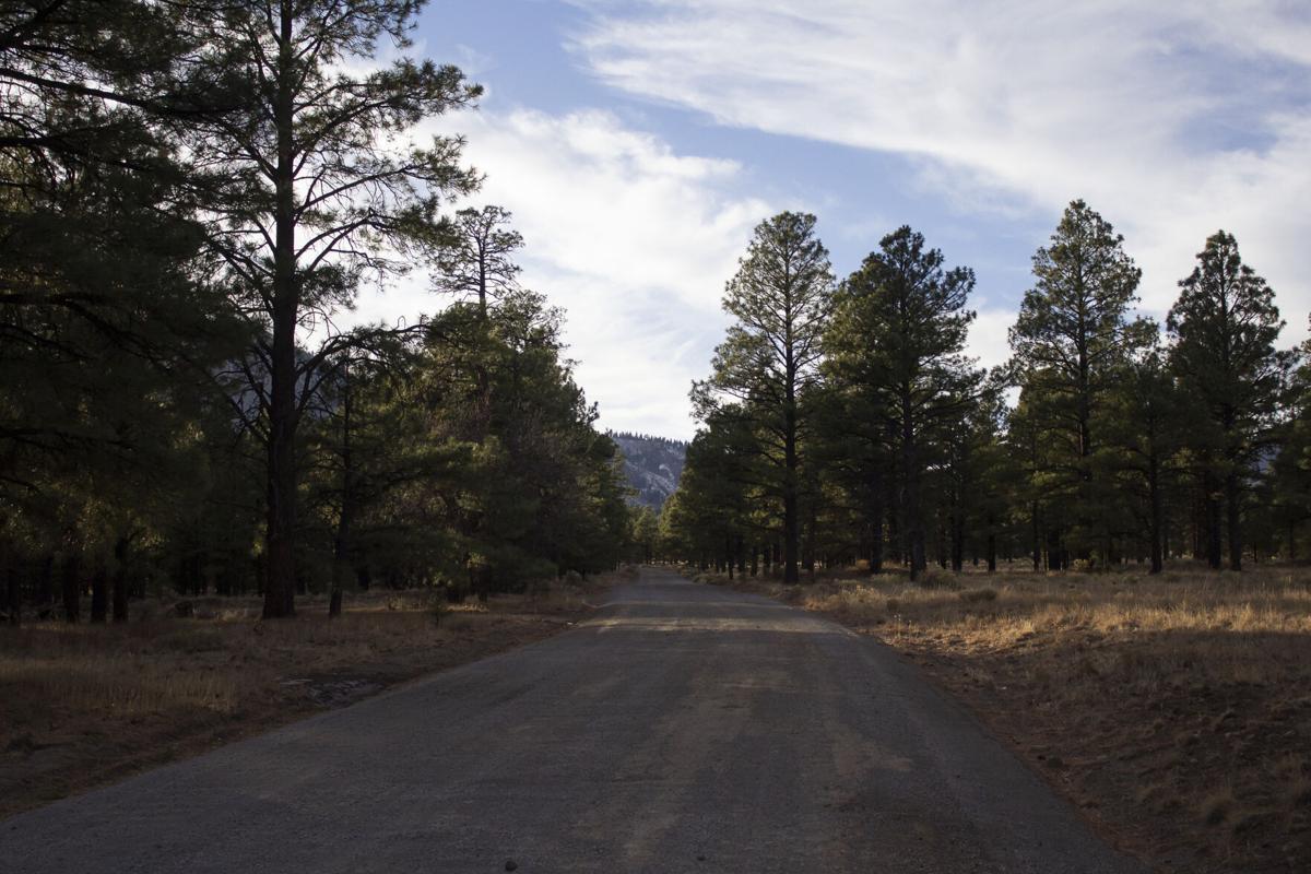 Trail Faeries work magic for Flagstaff environment
