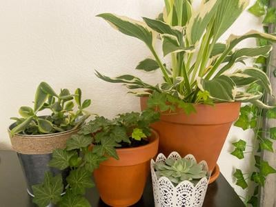 Plant parenting 101: Healthy house plants in small spaces
