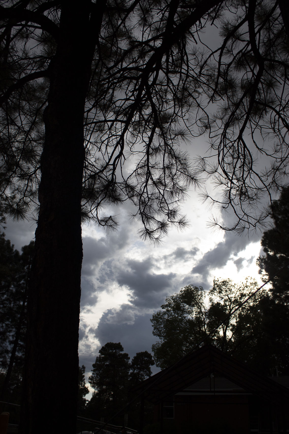 Weather update: thunderstorm temperatures targets Flagstaff