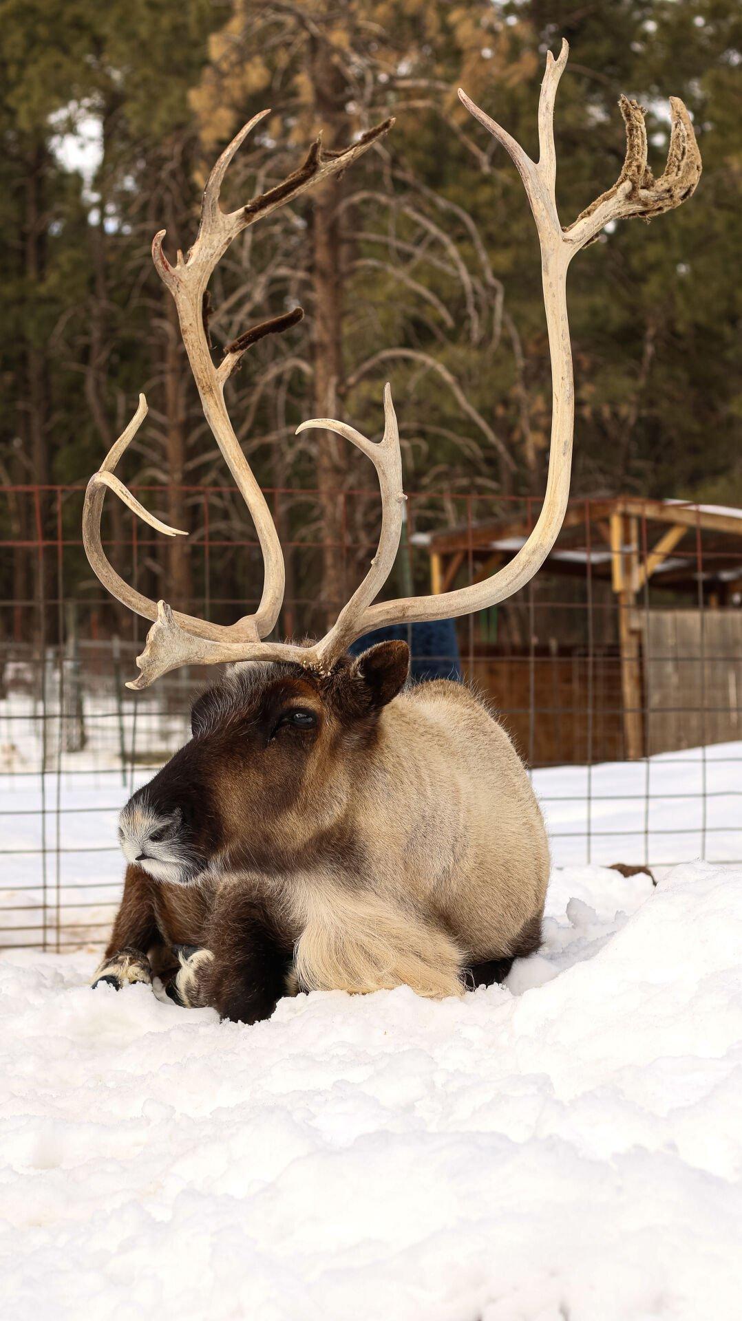 Grand Canyon Deer Farm provides interactive entertainment