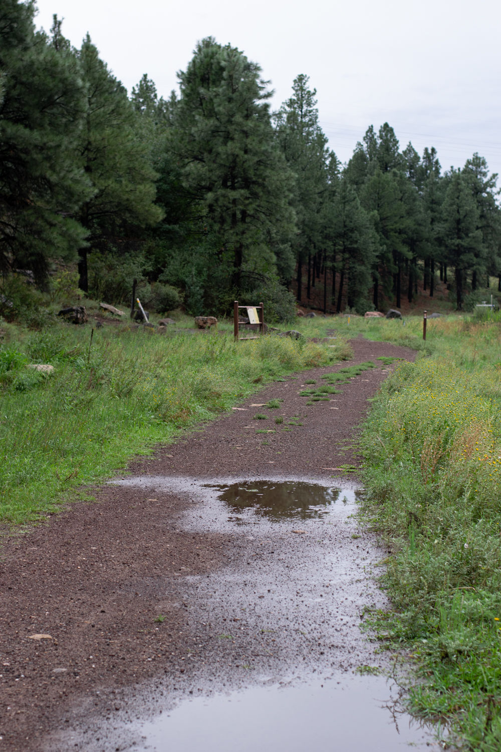 Rain continues to fall in Flagstaff
