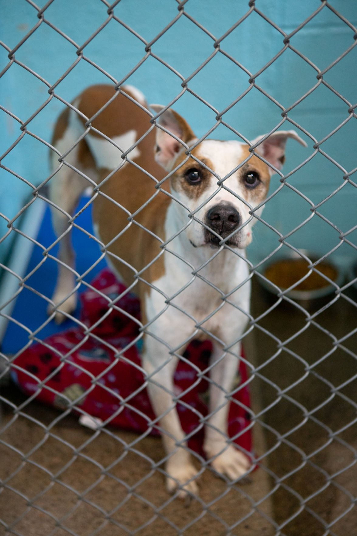 Euthanasia rates dropping in animal shelters